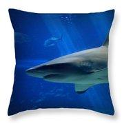 Reef Shark Throw Pillow