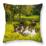 Reflected Light Throw Pillow