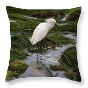 Reflecting At The Tide Pool Throw Pillow
