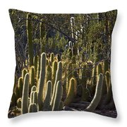 Reflecting The Sunshine Throw Pillow
