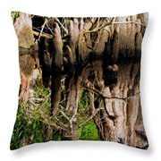 Reflection Of Cypress Knees Throw Pillow