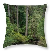 Reflections In Silver Falls State Park Throw Pillow