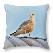 Reflections In The Sun Throw Pillow