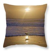 Reflective Spotlight  Throw Pillow
