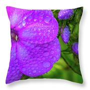 Refreshed Phlox 2 Throw Pillow