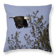 Regal Eagle Throw Pillow