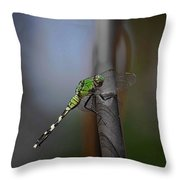 Regal Shadows Throw Pillow by DigiArt Diaries by Vicky B Fuller