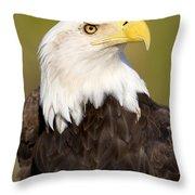Regale Throw Pillow