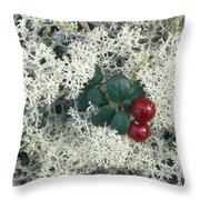 Reindeer Lichen And Low-bush Cranberry Throw Pillow
