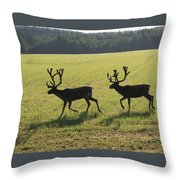 Reindeers On Swedish Fjeld Throw Pillow