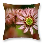 Rejoice The New Day Throw Pillow