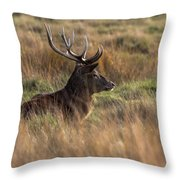 Relaxing Deer Throw Pillow