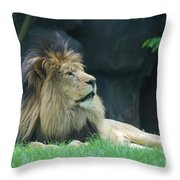 Relaxing Lion With A Thick Black Fur Mane Throw Pillow