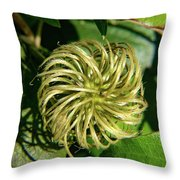 Remainder Of A Clematis Blossom Throw Pillow
