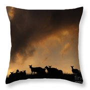 Remedy For The Insomnia Throw Pillow