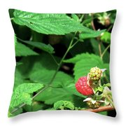 Remembering One Sweet Rasberry Throw Pillow