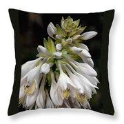 Renaissance Lily Throw Pillow