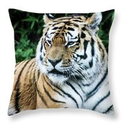 Rest Time Throw Pillow