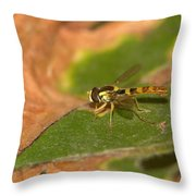 Resting 2 Throw Pillow