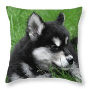 Resting Alusky Puppy Laying In Green Grass Throw Pillow