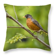 Resting American Robin Throw Pillow