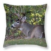 Resting Buck Throw Pillow