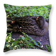 Resting But Alert Throw Pillow