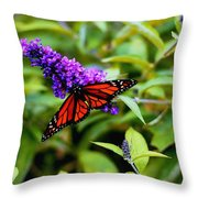 Resting Butterfly 2 Throw Pillow