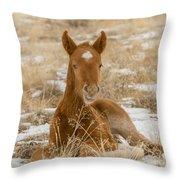 Resting Colt Throw Pillow