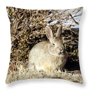 Resting Cottontail Throw Pillow