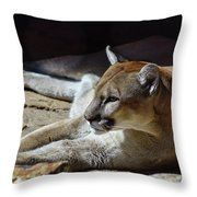Resting Cougar Throw Pillow