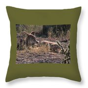 Resting Coyote Throw Pillow