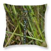 Resting Darner Throw Pillow