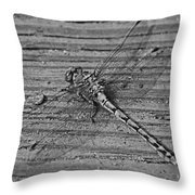 Resting Dragonfly -bw Throw Pillow