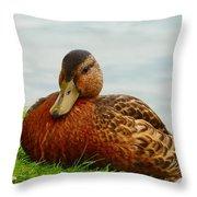 Resting Duck Throw Pillow