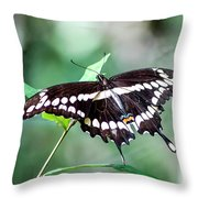 Resting Giant Throw Pillow