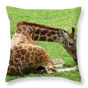 Resting Giraffe Throw Pillow