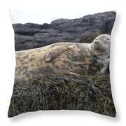 Resting Gray Seal On Seaweed Throw Pillow