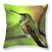 Resting Hummingbird Throw Pillow
