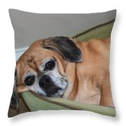 Resting Pooch  Throw Pillow