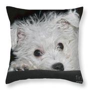 Resting Puppy Throw Pillow