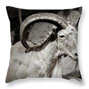 Resting Ram Throw Pillow
