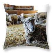 Resting Sheep Throw Pillow