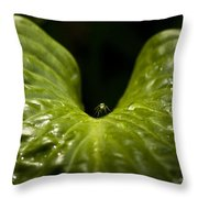 Resting Spot Throw Pillow