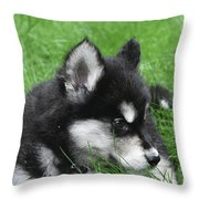 Resting Two Month Old Alusky Puppy Dog In Grass Throw Pillow