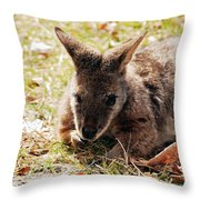 Resting Wallaby Throw Pillow