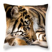 Resting Yet Watchful Tiger Throw Pillow