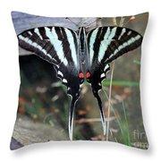 Resting Zebra Swallowtail Butterfly Throw Pillow