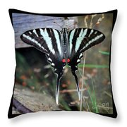 Resting Zebra Swallowtail Butterfly Square Throw Pillow
