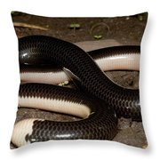 Reticulate Worm Snake Throw Pillow